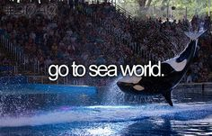 I want to go to Sea World no matter what people/haters says about the place. I believe that the animals aren't being treated poorly.