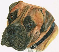 Bullmastiff, Dogs, Animals, Animales, Animaux, Pet Dogs, Bull Mastiff Dogs, Doggies, Animal