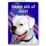 Happy 4th of July white boxer greeting card by ritmoboxer