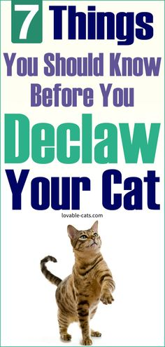 7 Things You Should Know Before You Declaw Your Cat Funny Animal Videos, Funny Animals, Cute Animals, Beautiful Cats, Animals Beautiful, Cat Toilet Training, Dog Pin, Animal Projects, Cat Treats