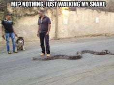 Just walking my snake. - http://funnypicturequotes.com/just-walking-my-snake/