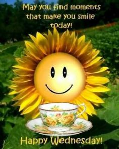 Hope your Morning is going well!: Having A Good Morning! Funny Wednesday Memes, Wednesday Morning Quotes, Wednesday Hump Day, Wednesday Greetings, Blessed Wednesday, Wacky Wednesday, Funny Good Morning Quotes, Wonderful Wednesday, Good Morning Flowers