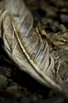 Forgotten, Forlorn, Feather....I would never walk by and leave a feather on the ground. I pick it up and clean it off and put it on my dresser or on a shelf...it may have dropped from an angel's wing!