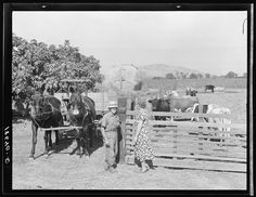 Rural rehabilitation, Tulare County, California. This farm couple have been assisted to independence. In Feburary 1936 they rented a neglected farm of forty acres planted in grapes. They had no equipment, no stock, no seed, no money. Farm Security Administration (FSA) granted a loan of one thousand two hundred and sixty one dollars to cover these items, and four months subsistence for the family. Now November 1938, they are reestablished on a successful diversified farm, with a cash crop provided by vineyard, cows, hogs, and pigs Photographer Dorothea Lange Created November 1938 Dorothea Lange Photography, Agricultural Engineering, Tulare County, Migrant Worker, Types Of Resources, Documentary Photographers, One Dollar, Old Barns