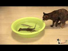 Коты против рака / Cats vs cancer