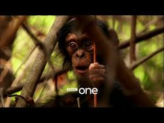 Programme website: http://www.bbc.co.uk/programmes/p027q949 David Attenborough takes us on the greatest of all adventures – the journey through life.