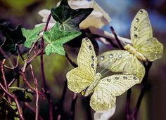 #butterflies #pretty #nature #photography #melodypepper #weddings