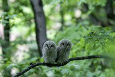All photos gallery: Cute animal happy life, cute animal photos ...