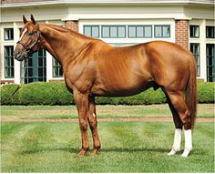 Curlin; amazing racehorse