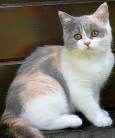 """Beware of people who dislike cats."" --Irish Proverb"