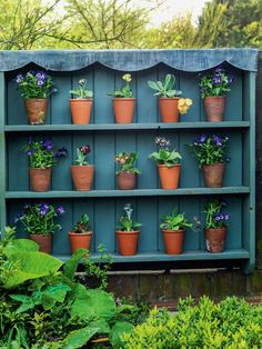 auricula theatre - Google Search