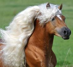If you have seen nothing but the beauty of their markings and limbs, their true beauty is hidden from you. -Al Mutannabbi So it is with horses...it is the same with people.  Look for the true beauty inside everything, everyone, and yourself.  It is there, Skyland friends, it is there.