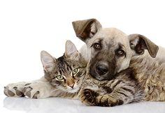 Les #assurances pour #animaux : le vrai du faux