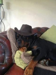 """Check out our website for even more details on """"rottweiler dogs"""". It is an outstanding spot to get more information. Big Dogs, I Love Dogs, Dog Pictures, Animal Pictures, Cute Puppies, Cute Dogs, Rottweiler Breed, Dog Breeds, Dog Lovers"""