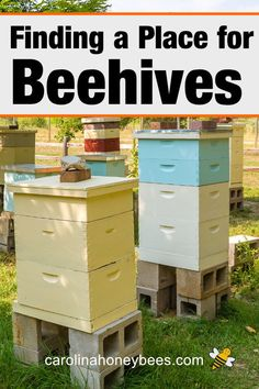 How to find the best location for your beehive? Hive placement plays an important role in the health of your bee colony. These tips will help you find the best spot. Bee Hives Boxes, Bee Boxes, Landscape Design Small, Small Garden Design, Little Gardens, Small Gardens, Bee Hive Plans, Beekeeping For Beginners, Bee Honeycomb