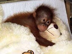 Have you hugged your teddy-bear today? fur babies / GcF