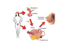 La tendenza del peso corporeo è strettamente legata ad alcune sostanze chimiche rilasciate dal nostro corpo: gli ormoni. Sono infatti questi a regolare una