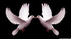 Kiss, Kiss.  Sweet Dove Kisses