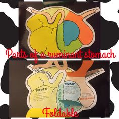 Parts of a ruminant stomach foldable!