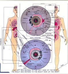 What Is Iridology Used For | Iridology - The Art of Reading The Eyes