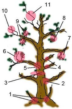 bonsai branch rules and what to be careful about
