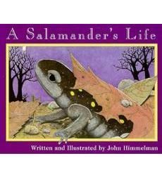 John Himmelman's color illustrations and simple text relate the life cycle of a salamander as it grows from being an egg to a larva to an adult female salamander which hunts for food and lays...