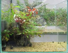 Fuck Yeah Aquascaping — A paludarium without filtering