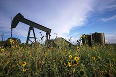 Oil Rigs and Sunflowers   Flickr - Photo Sharing!