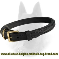 Belgian Malinois Braided 2 Ply Leather Dog Collar