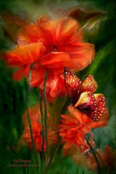 Tall Poppies...by Carol Cavalaris  <3<3<3AN AWESOME ARTIST WITH A MAGICAL GIFT ESPECIALLY WITH FLORA<3<3<3