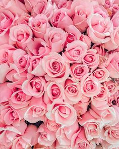Beautiful Flowers Wallpapers, Beautiful Roses, Pretty Flowers, Flower Phone Wallpaper, Wallpaper Backgrounds, Iphone Wallpaper, Pink Roses, Pink Flowers, Paper Flowers