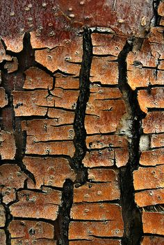 7. Fully Abstract a) When first looking at this image I had no idea what it was, this rough brown texture that almost looks as though it is falling apart at the seams displays a very repetitive alluring pattern. I believe it is representing a sense of disconnection between nature b) This fully abstract image has used colours, texture and repetition to provide a confusing and unknown abstract image Photographer: Mary Siebert