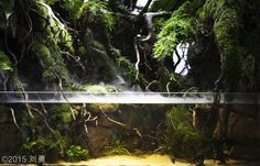 2015 AGA Aquascaping Contest - Entry #353