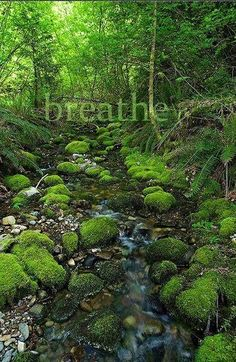 Breathe in healing green vital life-force.