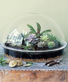 Mini jardines para el interior | Decorar tu casa es facilisimo.com