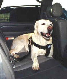 Champion Canine Seat Belt-crash tested and my favorite dog seatbelt