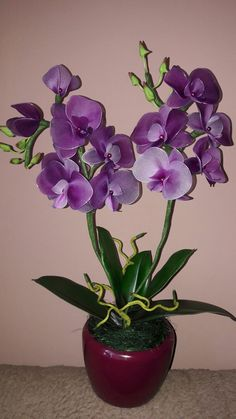 Orchids Garden, Purple Orchids, Orchid Plants, Purple Flowers, Indoor Flowers, Exotic Flowers, Amazing Flowers, Beautiful Flowers, Orchid Flower Arrangements