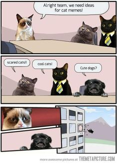 We need ideas for cat memes…