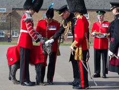 The Duke of Cambridge presents a sprig of shamrock to Domhnall the Irish Wolfhound, the mascot of the 1st Battalion Irish Guards, during a St. Patrick's Day Parade in Hounslow, west London