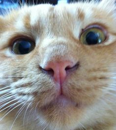 """""""What is it sweetheart? More boy trouble?"""" - Haymitch Abernathy [Cats That Look Like The Hunger Games' Buttercup]"""