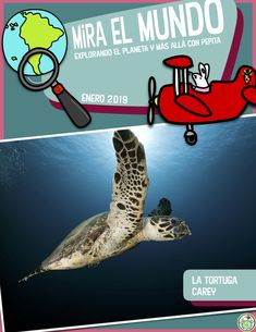 The January issue of our non fiction magazine in Spanish for kids features la Tortuga carey , Hawksbill Sea Turtle, critically endangered-included with the magazine are activity pages, links to authentic resources, and more! Mundo de Pepita, Resources for Teaching Spanish to Children High School Spanish, Elementary Spanish, Spanish Classroom, Elementary Teacher, Upper Elementary, Spanish Lesson Plans, Spanish Lessons, Teaching Themes, Learning Resources