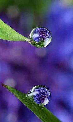 How To Draw Water Droplets Dew Drops Trendy Ideas Dew Drops, Rain Drops, All Nature, Amazing Nature, Amazing Photography, Nature Photography, Foto Macro, Macro Photo, Fotografia Macro