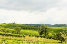 Cascina Garitina | Savoring Italy #Piedmont #wine #vineyards