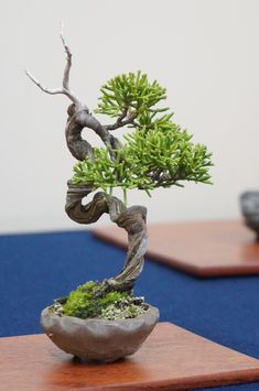 Indoor or Outside Ornamental Flowering Bonsai Timber Some bonsai timber like every other tree flower and produce fruit. A daily apple tree, for instan. Mame Bonsai, Ficus Bonsai, Buy Bonsai Tree, Flowering Bonsai Tree, Juniper Bonsai, Bonsai Plants, Bonsai Garden, Plantas Bonsai, Ikebana