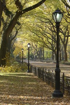 Literary Walk in Central Park, NYC