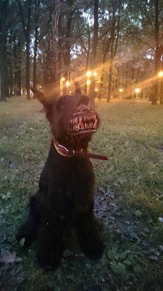 Werwolf-Maulkorb für Hunde on http://www.drlima.net