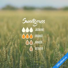 Sweetgrass - Essential Oil Diffuser Blend