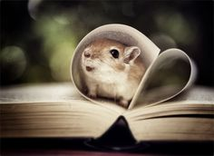 whoever took this photo, <3 the gerbil is adorable!