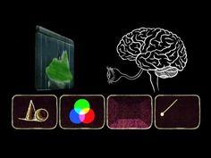 Animation basics: The optical illusion of motion - TED-Ed - YouTube