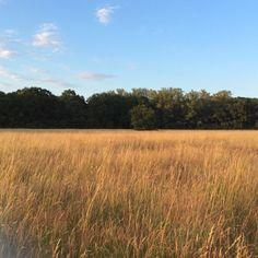 Very old field by Jacek Tabisz on SoundCloud